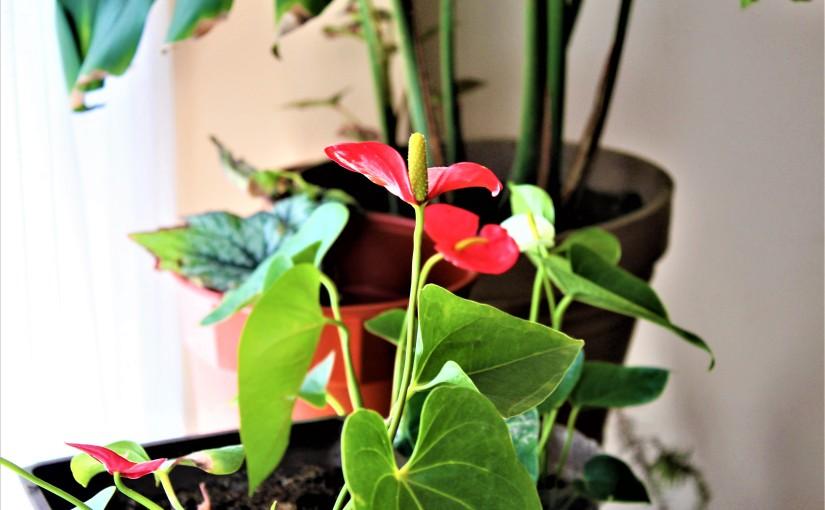 Las plantas de mimadre