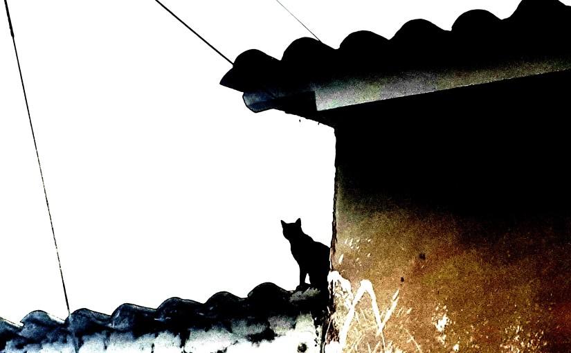 El gato yella